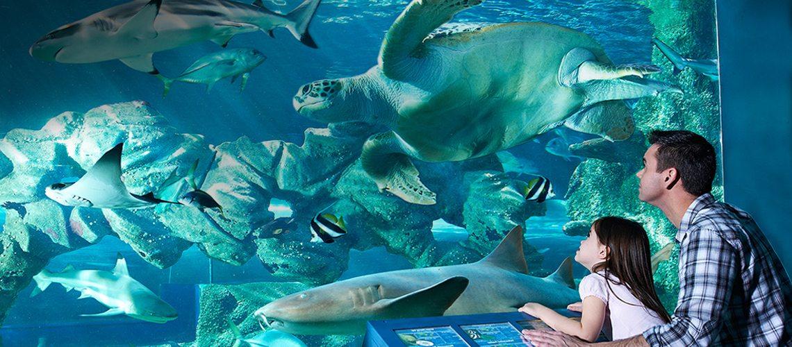 family in the Oceanarium