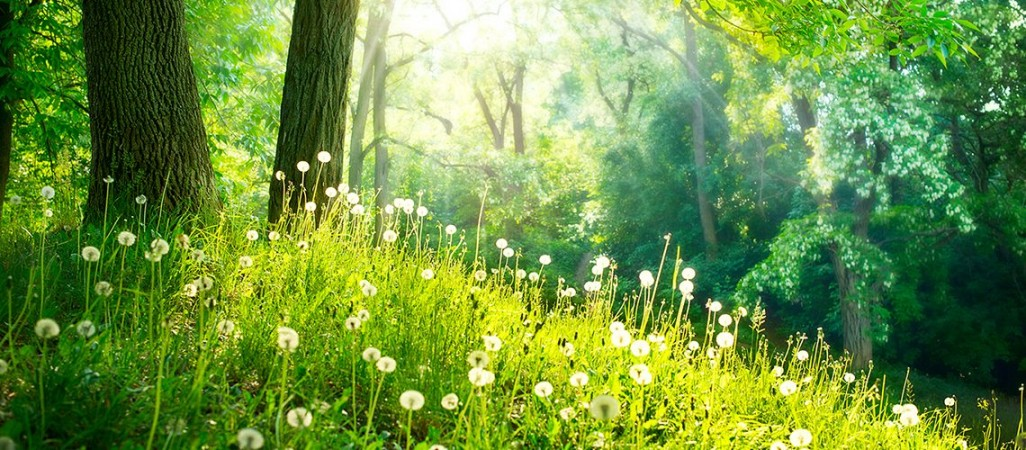 Sole Jewell green field
